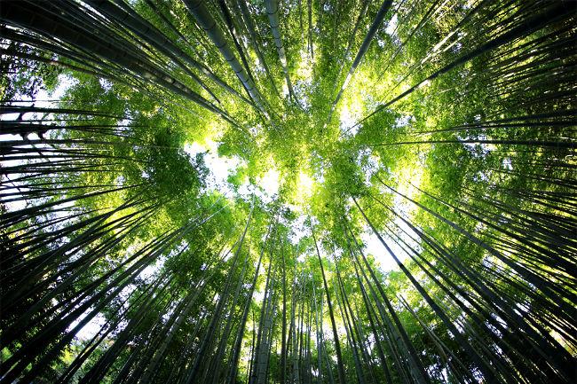 Potential entfalten - Bambusbaum