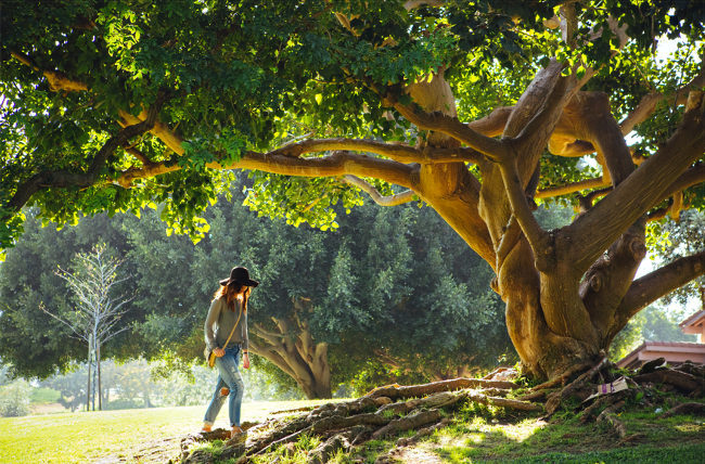 Potential entfalten - Ruheort Baum